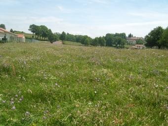 Vente Terrain 914m² Montfaucon-en-Velay (43290) - photo