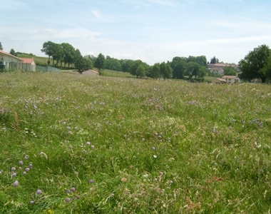 Vente Terrain 914m² Montfaucon-en-Velay (43290) - photo