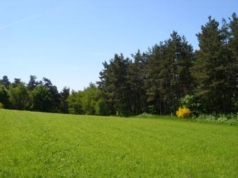 Vente Terrain 2 835m² Hameau à proximité de Grazac. - photo