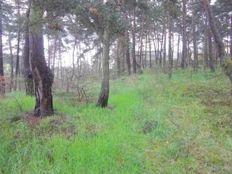 Vente Terrain 6 630m² Coubon (43700) - photo