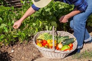 Lutte Covid-19 : Les plants pour les potagers désormais autorisés à la vente