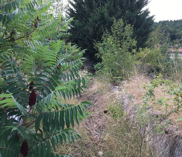 Vente Terrain 561m² Beauzac (43590) - photo