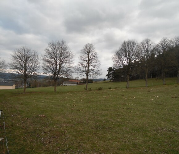 Vente Terrain 3 500m² Tence (43190) - photo