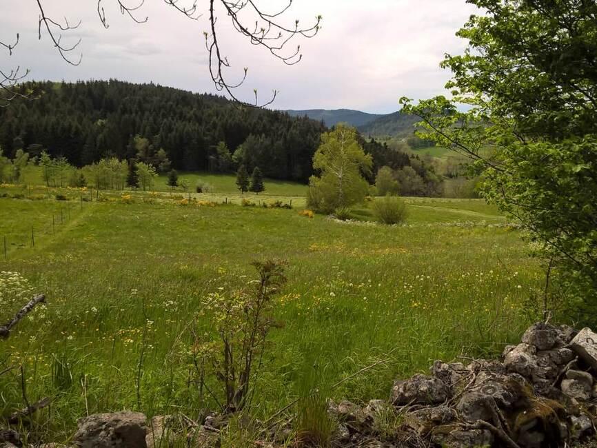 Vente terrain saint jeures 43200 101339 for Vente terrain
