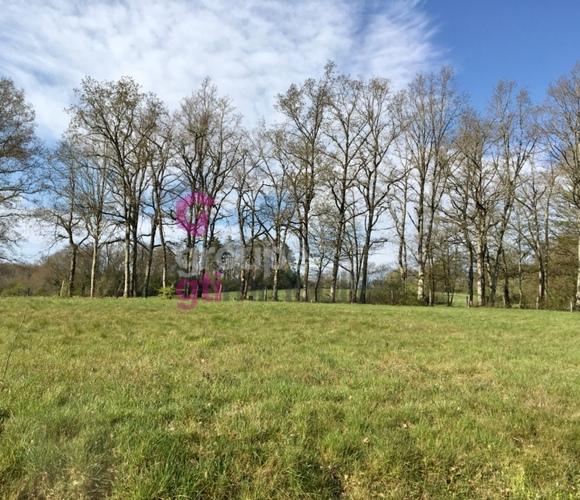 Vente Terrain 1 430m² Néronde-sur-Dore (63120) - photo